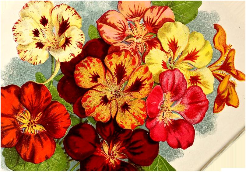 activite forme fleur
